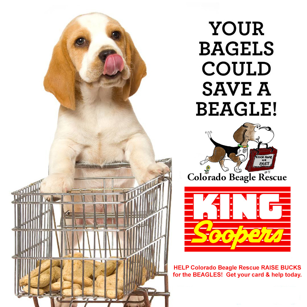 Your bagels could save a Beagle!
